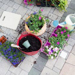 plantera växter